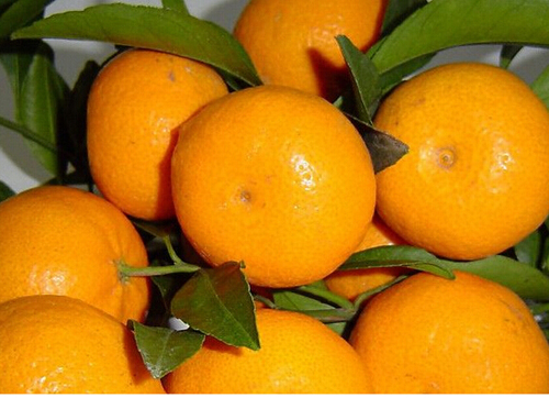 蜜柑能减肥吗