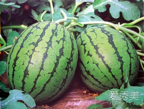为什么春天要养肝 春天养肝吃什么水果