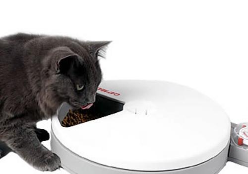 猫咪的饲养正确方法4大原则