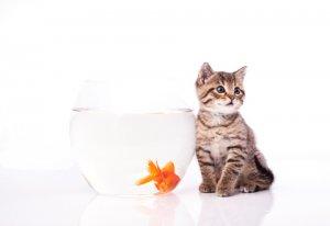 怎样饲养猫 盘点日常对猫有害的食物