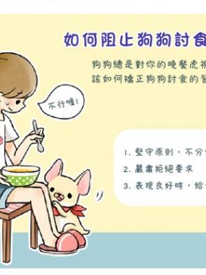 吃饭的时候遇到宠物狗狗乞食如何调教