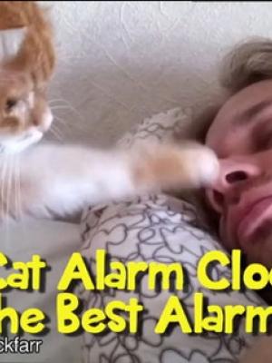 猫闹钟让你早上起来都是多么美好的一天