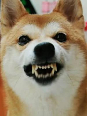 狗狗半夜叫怎么办 狗狗为什么半夜叫背后的意义