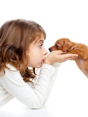 小苏打的妙用 利用小苏打消除宠物狗的体味