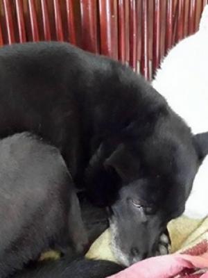家里的白猫黑狗经典相片黑白配