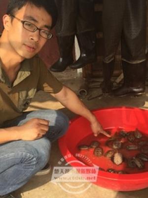 中外乌龟混战引起大量乌龟死亡