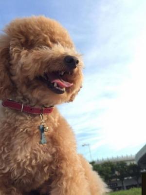 夏日遛狗时以下6件事情必须得多留意