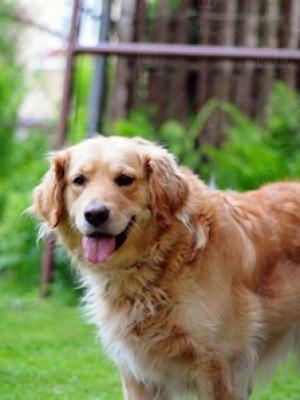 家里狗猫一年四季老是掉毛是什么原因