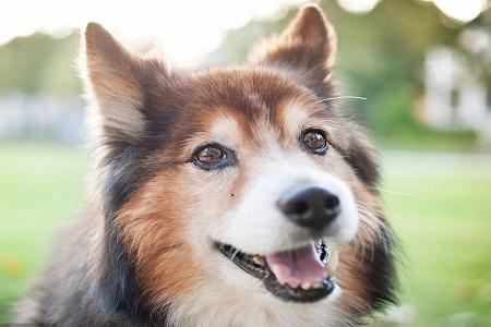 快来看看挑选什么合适 陪你一起运动快乐的狗狗们