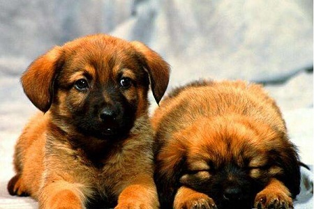 日常生活中你抚摸狗狗的正确吗?快来看看你是正确的不