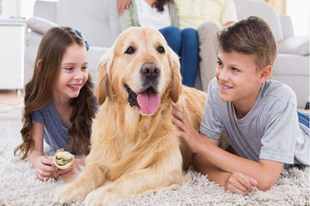 请大家能不能不要喂我家狗吃东西?这样会给它带来健康问题