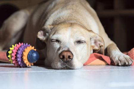 依据问题发生的原因 宠物狗鼻头干裂治疗方案